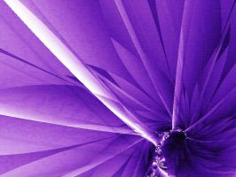 The Purple Flower by 16stepper