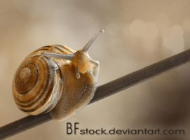 ID May 2012 by BFstock