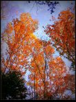Birch Trees in Fall by surrealistic-gloom