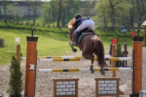 Chestnut Horse - Show Jumping stock - 11.4 by MagicLecktra