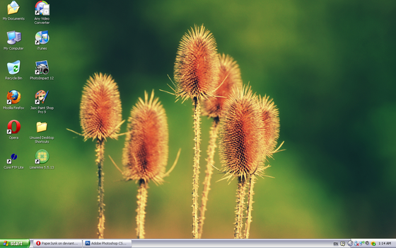 August '10 Desktop: Flowers by PaperJunk