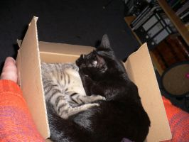 cats in the box II by ChaosStocks