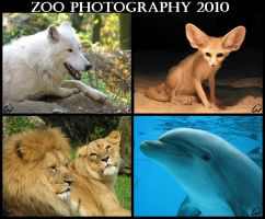 Animal photocalendar FOR FREE by woxys