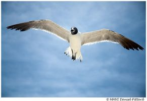Wing Span by dspittard