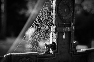 Cobwebs on the grave. by rayxearl