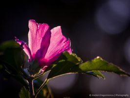 Translucent by DrAndrei