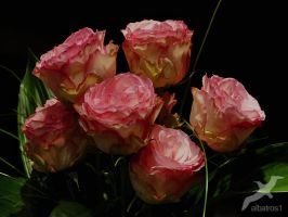 Bouquet of roses l by albatros1