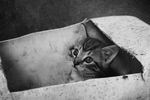 Kitten in the Box by Vilyane