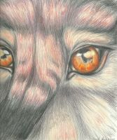 Fire in Your Eyes (FRAMED ORIGINAL for sale) by Aki-rain