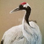 Red-crowned Crane by silvercrossfox