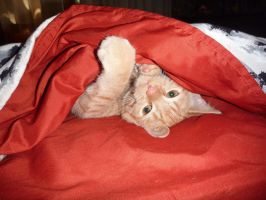 Under Cover Cat by Orkiss