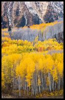 Mountain Side of Colors by ChimpyJay