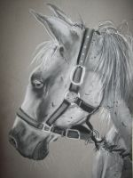 Horse Pastel by naruto32