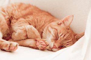 sleeping cat by herbstkind
