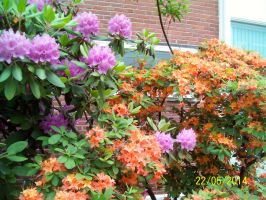 Orange and Pink Flowers 2 by DerpyDash64