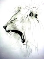 Lion 2013 - Sketch by Balanyuk