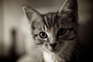 me new cat 2 by bradgar