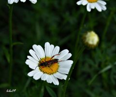 Beetle on vacation by biba59