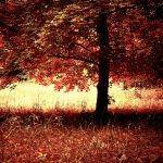 forest fire II by tangleduptight
