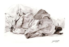 Dachshund by Justysiak