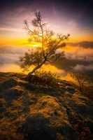 Magic tree by mjagiellicz