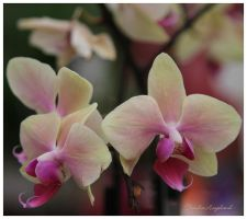 Flowers by Claudia008