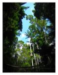 Rainforest Canopy by HeWhoWalksWithTigers