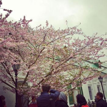 Spring by areneaksi