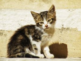 chaton by libellule64wazka