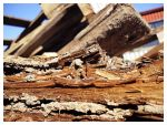 Old Wood by DaSef