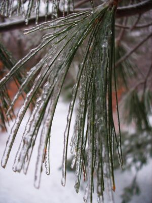 Ice on the Pines by InfiniteNesmith