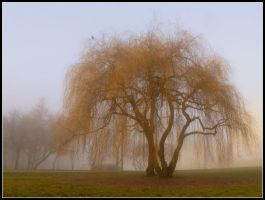 Tree in a fog by Shira9