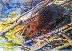 Eager Beaver - acrylics by Giselle-M