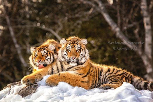 The Twins by Sagittor
