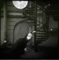 follow the white rabbit II by SiVkiN