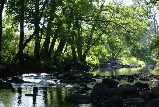 Riverbed 4 by Deanna64