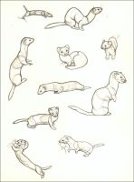 Weasels by nikkiburr