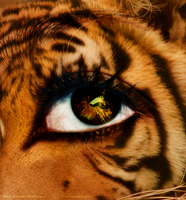 Eye of the Tiger by Crazy-Kiwii
