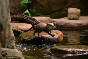 Jumpin otter by Mkatpro11