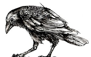 Ink Crow by Cookiehalo