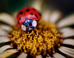 Lady Bug by DeniseSoden