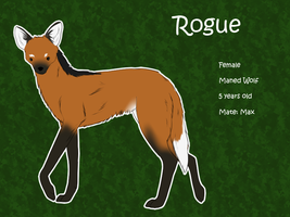Rogue [Official Ref] by Alcemistnv