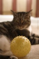Really that's my ball by ahley