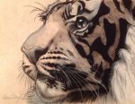 Charcoal Tiger by eckoh47