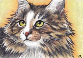 Norwegian Forest Cat by LenaZLair