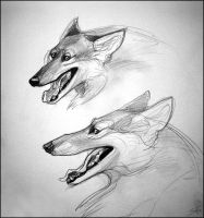 Character Design: Wolf by TheUrbanFox