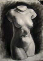 Torso drawing by Fenster