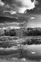 Dead Tree in the Pond by RRocket-204