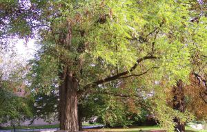 Baum 02 by The-Insignificant