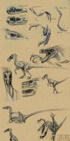 Velociraptor sketches by Autlaw